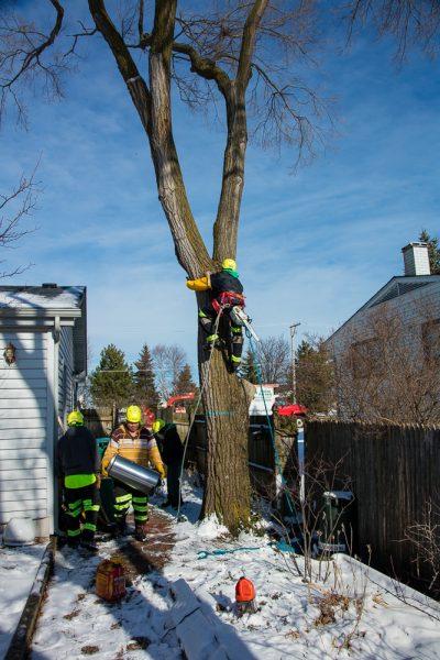Precise-Tree-Care-108