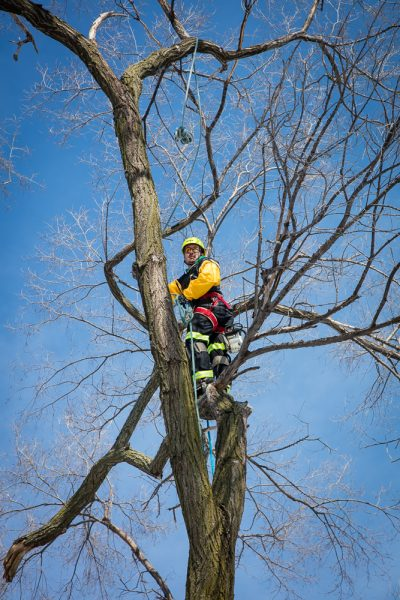 Precise-Tree-Care-111