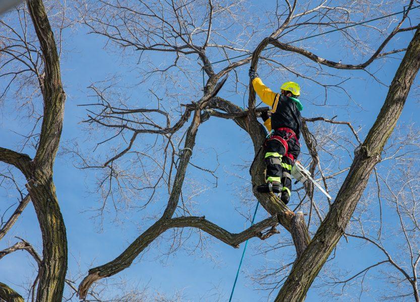 Precise-Tree-Care-117