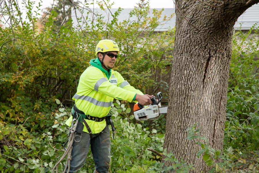Precise-Tree-Care-12