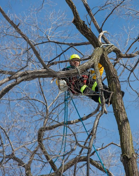 Precise-Tree-Care-121
