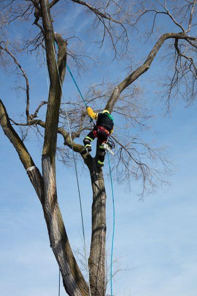 Precise-Tree-Care-124