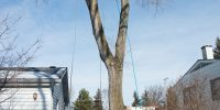 Precise-Tree-Care-125