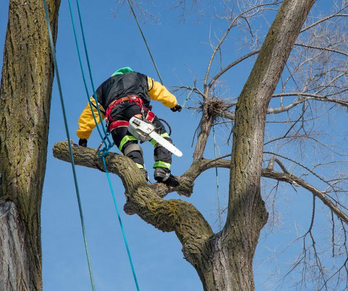 Precise-Tree-Care-127