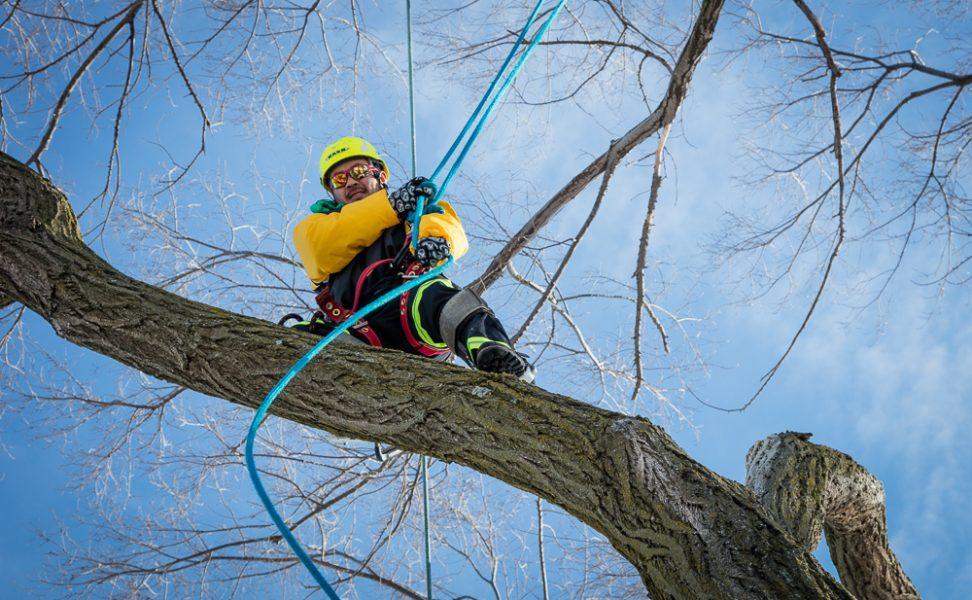 Precise-Tree-Care-128