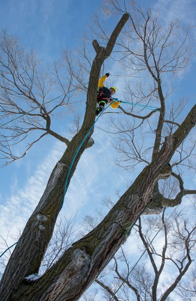 Precise-Tree-Care-130