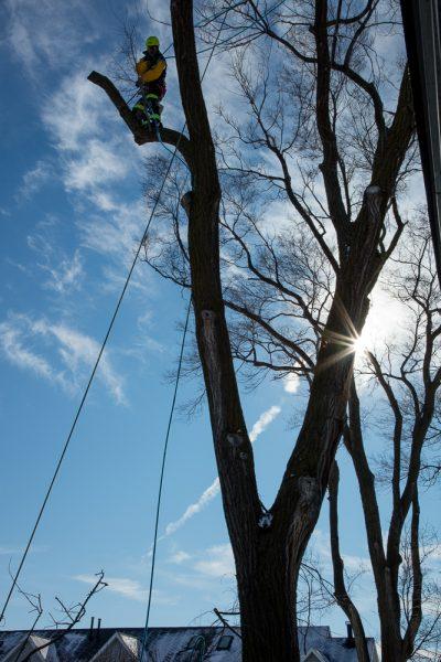 Precise-Tree-Care-137