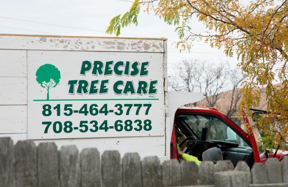 Precise-Tree-Care-2