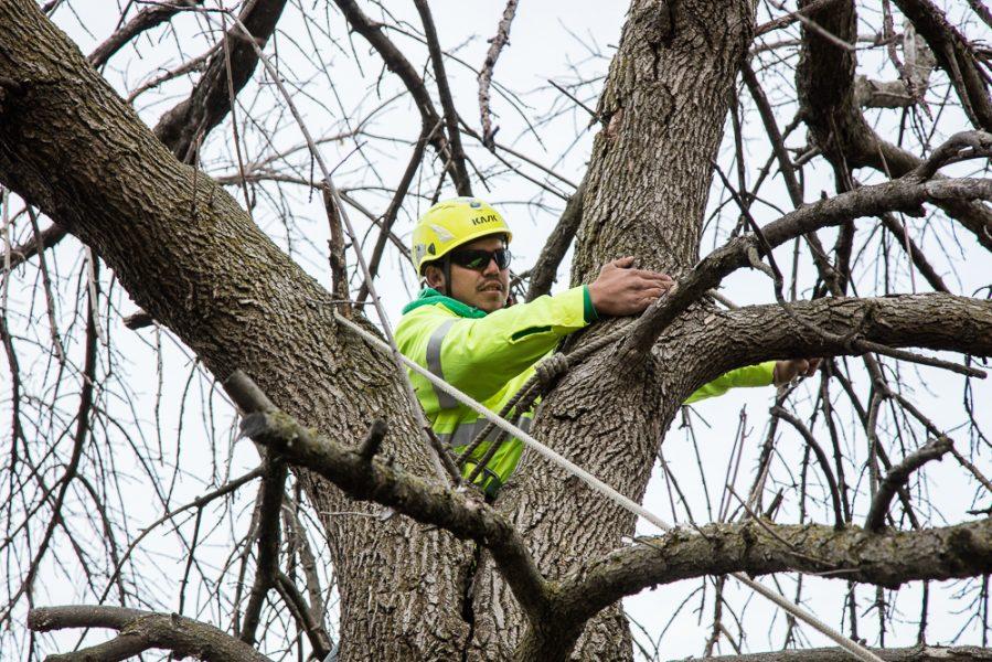 Precise-Tree-Care-21