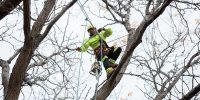 Precise-Tree-Care-27