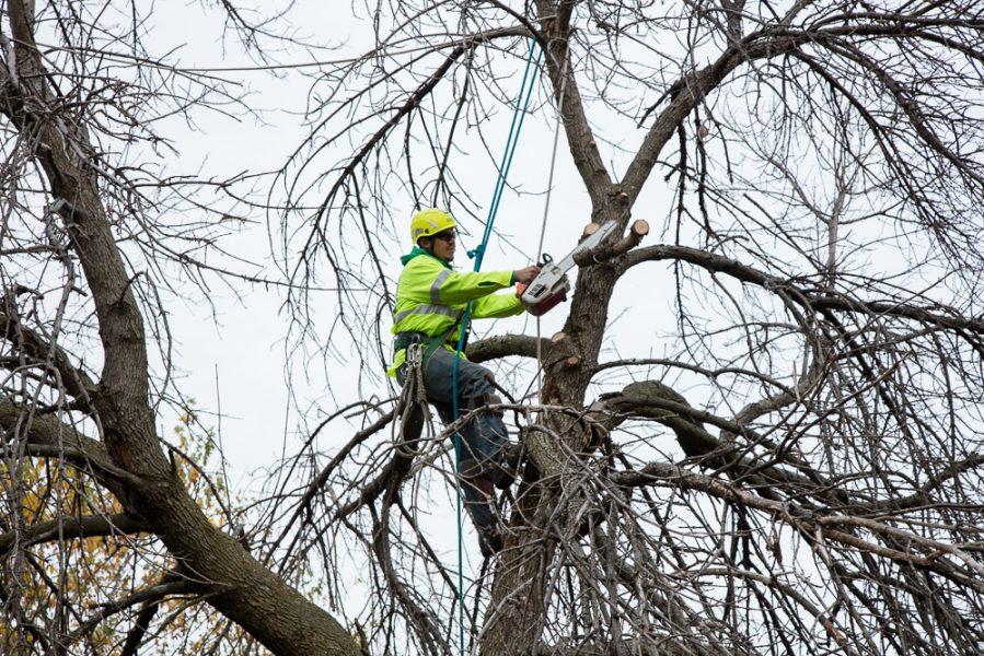 Precise-Tree-Care-29