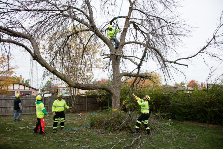 Precise-Tree-Care-32