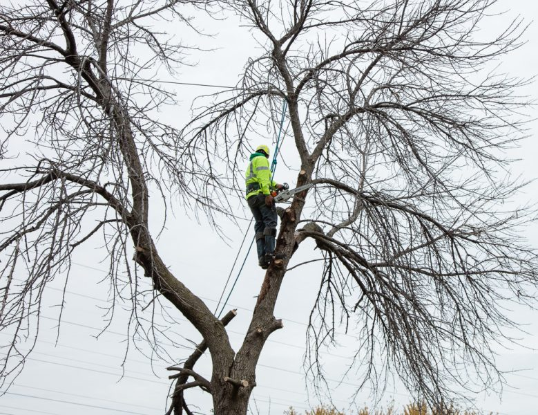 Precise-Tree-Care-50