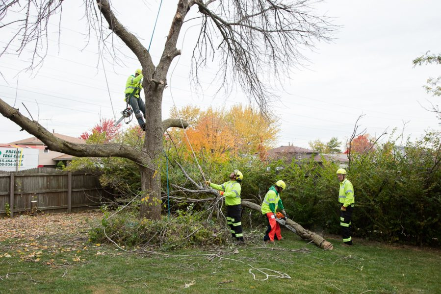 Precise-Tree-Care-52