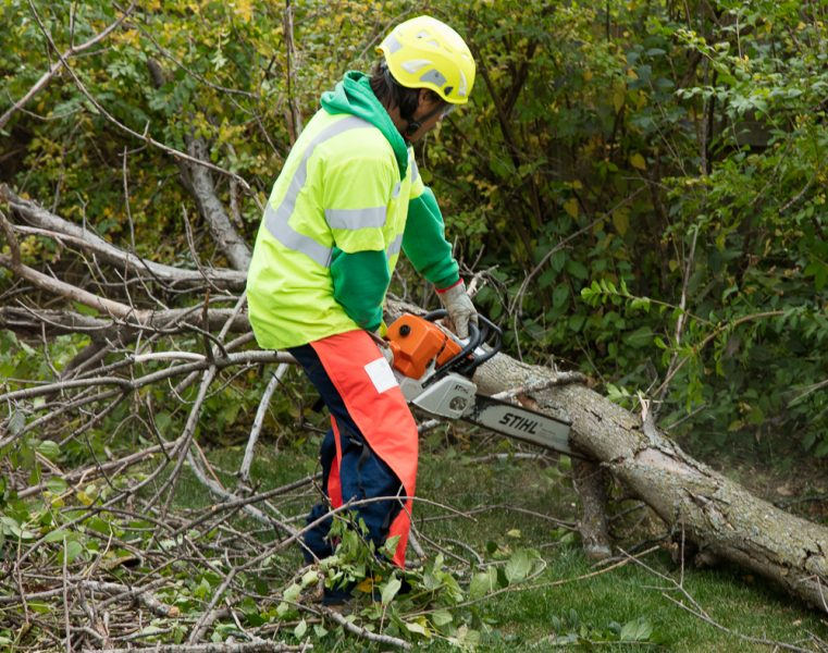 Precise-Tree-Care-54