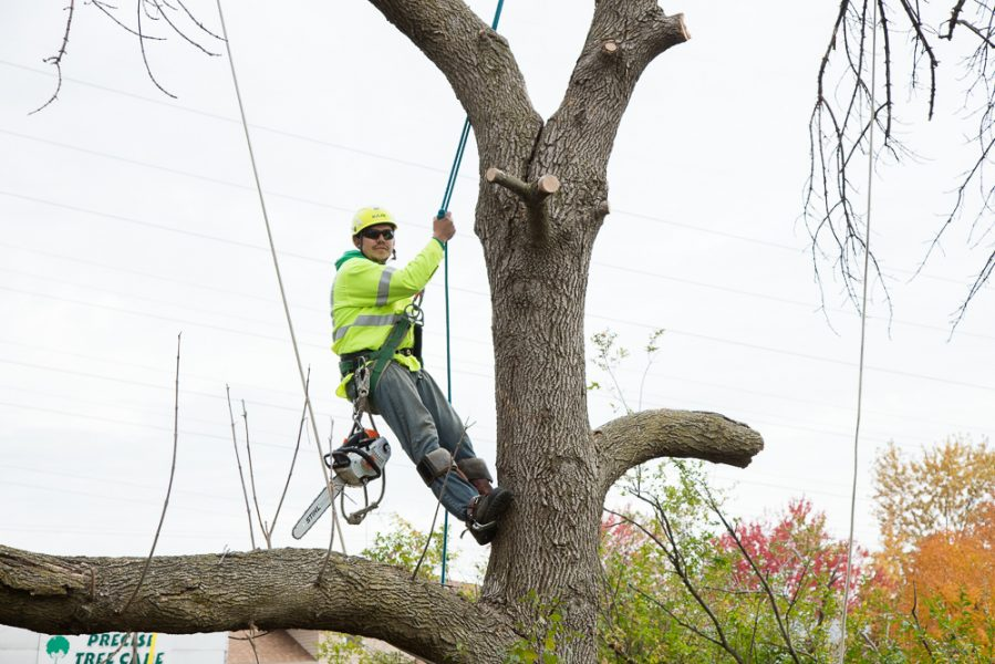 Precise-Tree-Care-55
