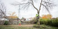 Precise-Tree-Care-58