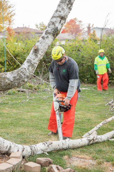 Precise-Tree-Care-60