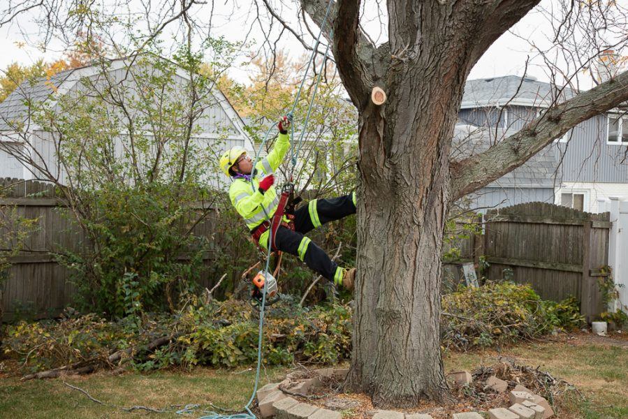 Precise-Tree-Care-7