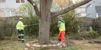 Precise-Tree-Care-70