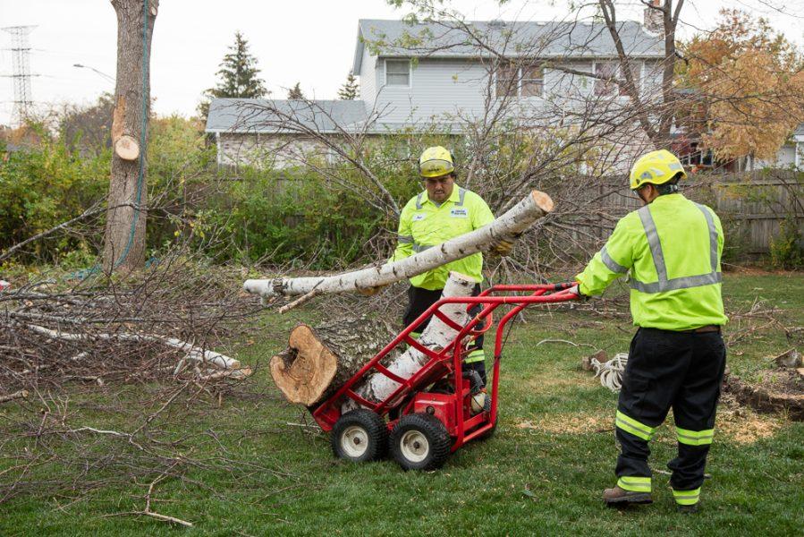 Precise-Tree-Care-74