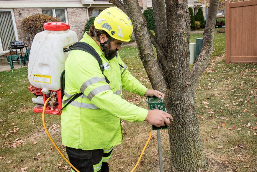 Precise-Tree-Care-87