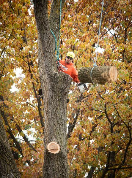 Precise-Tree-Care-93
