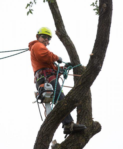 Precise-Tree-Care-95